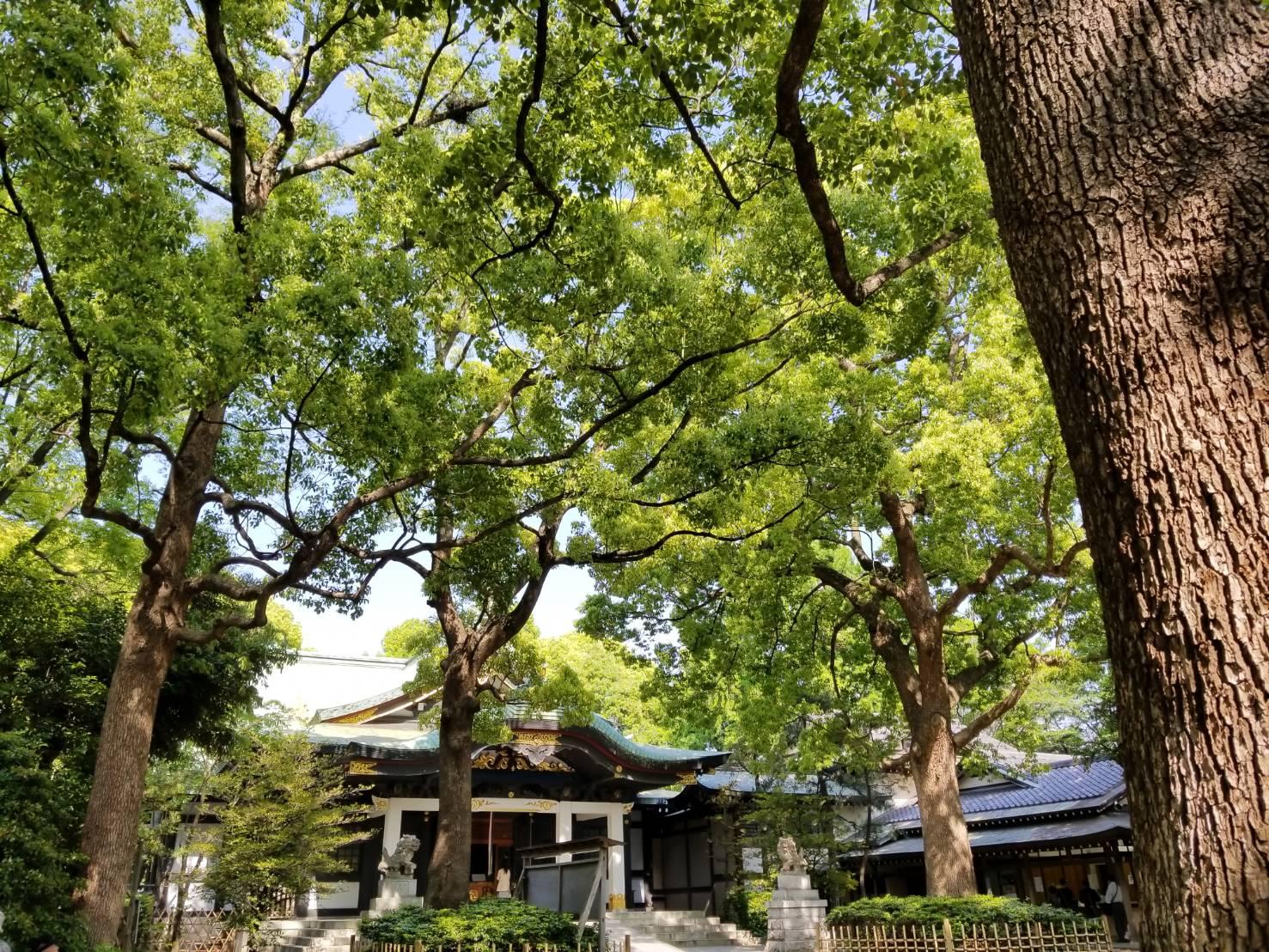 緑に囲まれている王子神社