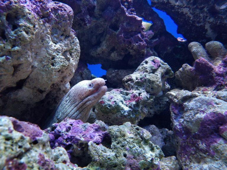 ワイキキ水族館、うつぼ