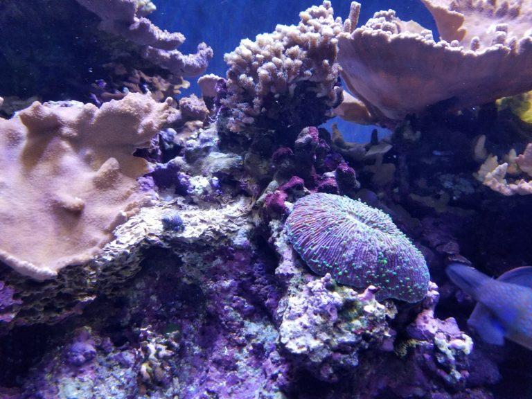 ワイキキ水族館、イソギンチャク