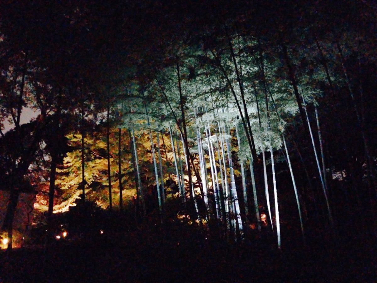 六義園、竹林の向こうに紅葉。青と赤のコントラストが綺麗