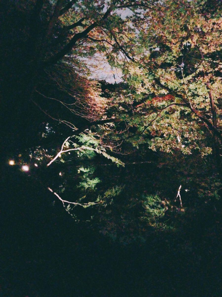 六義園、紅葉が水面に映ってキレイ