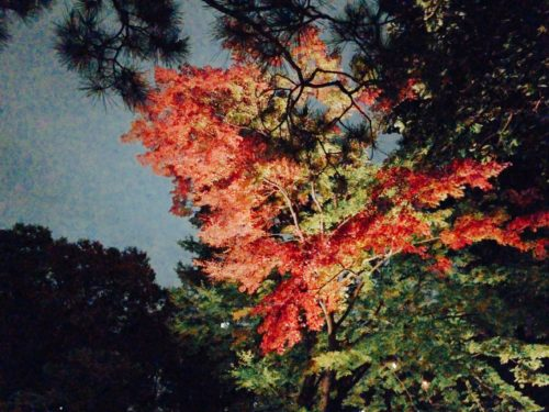 六義園、紅葉