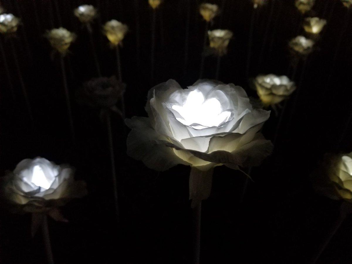 発光ダイオード(LED)で制作された25,550本のバラ。DDP