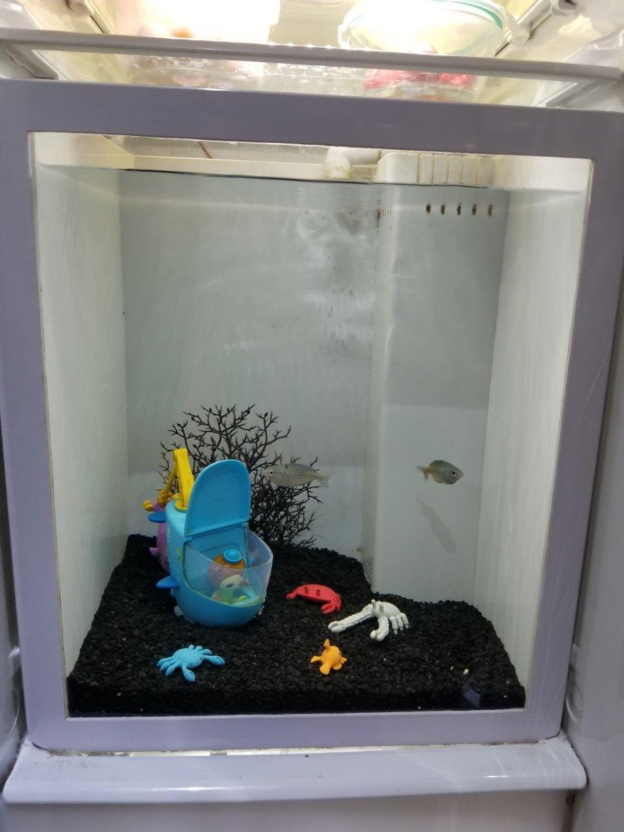 コエックス・アクアリウム:お魚のワンダーランド:冷蔵庫風水槽