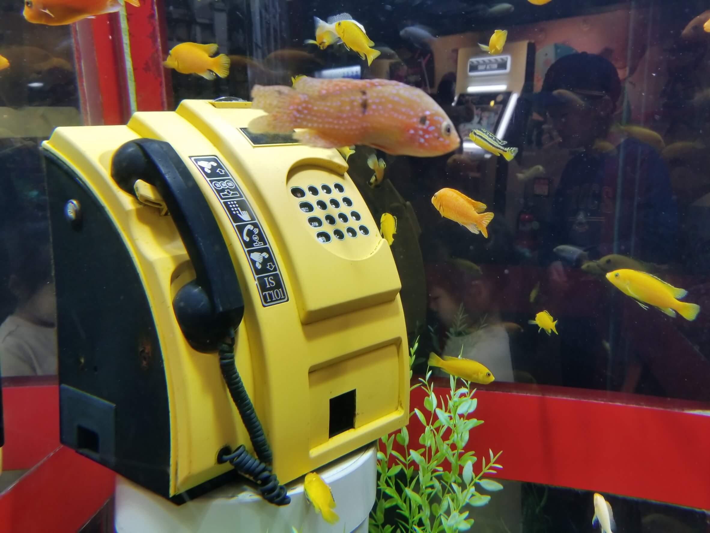 コエックス・アクアリウム:電話ボックス型水槽