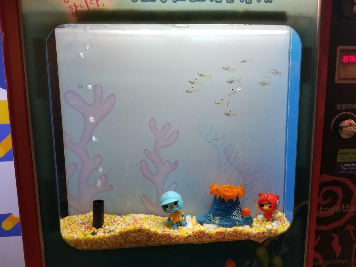 コエックス・アクアリウム:お魚のワンダーランド:自販機風水槽。ゆるキャラもいます!