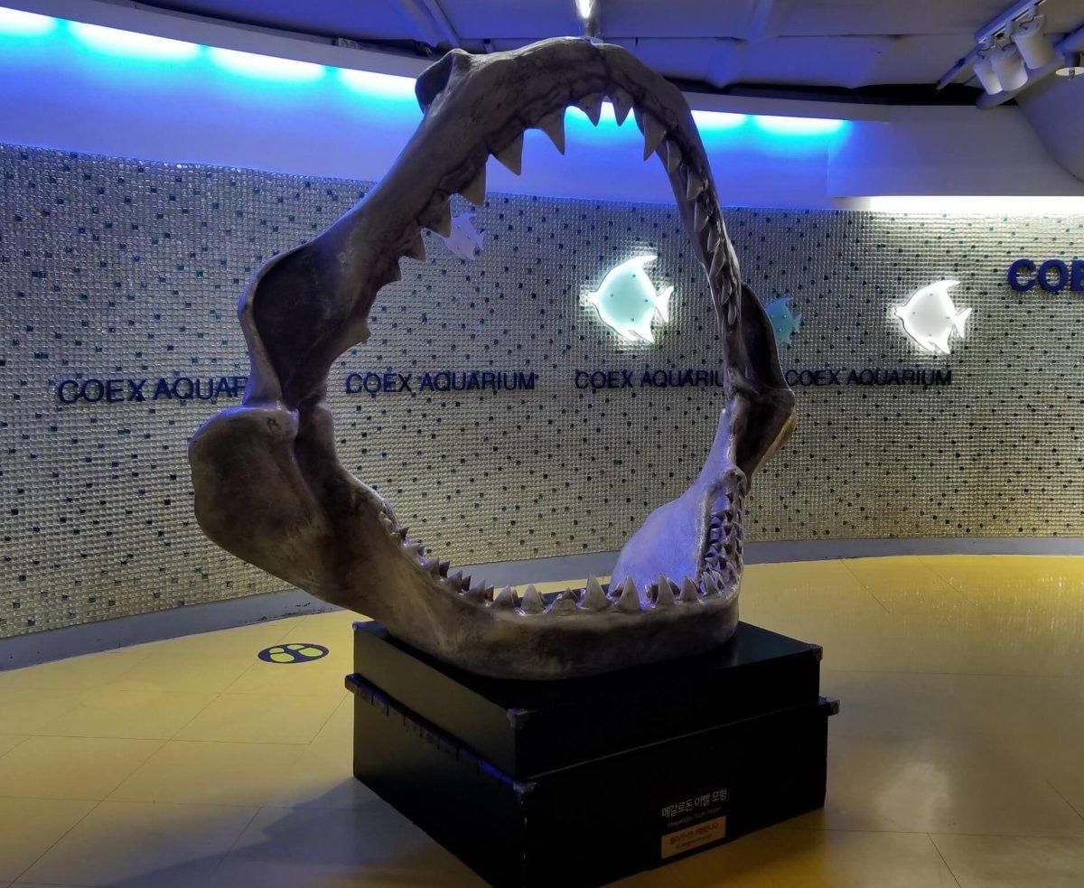 COEX ARARIUM(コエックス・アクアリウム):シャーク化石