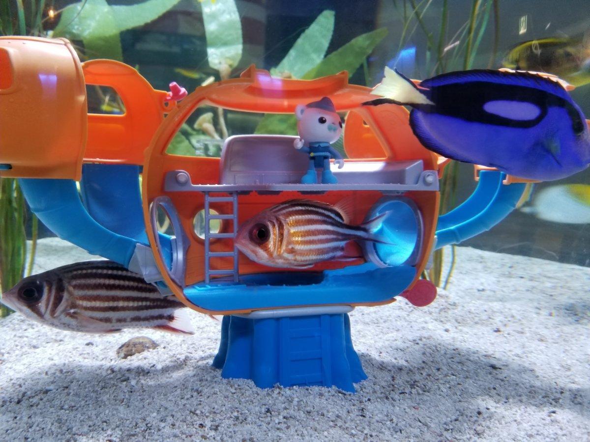 COEX ARARIUM(コエックス・アクアリウム):ゆるキャラ水槽 ドリーがいる!