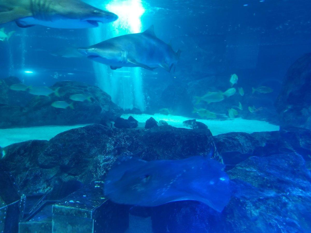 コエックス・アクアリウム:サメ&マンタ?エイ?