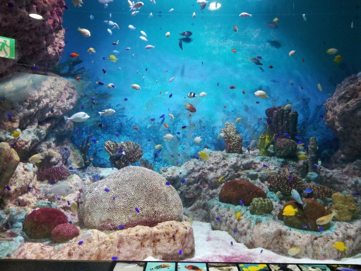 コエックス・アクアリウム:サンゴ:南の海