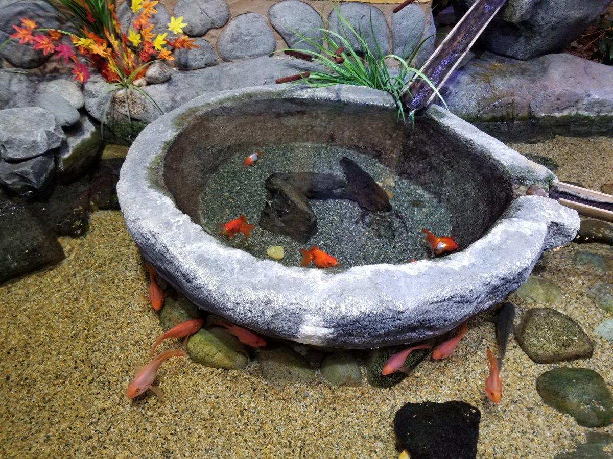 コエックス・アクアリウム:韓国の庭園:金魚