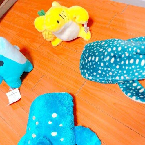 サメのぬいぐるみ:サメぐるみサミット