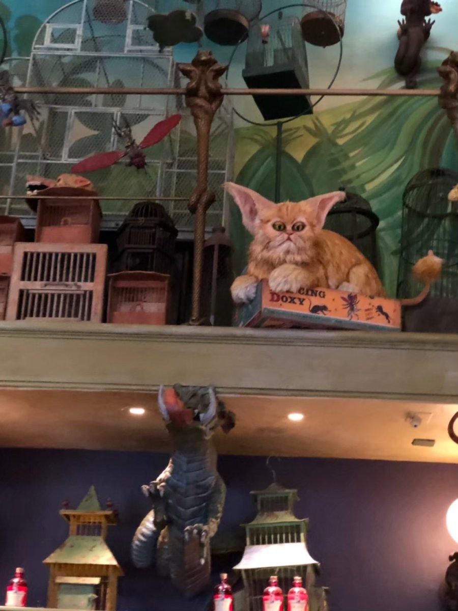 魔法動物ペットショップ:あれはもしや、ハーマイオニーのペットでは?