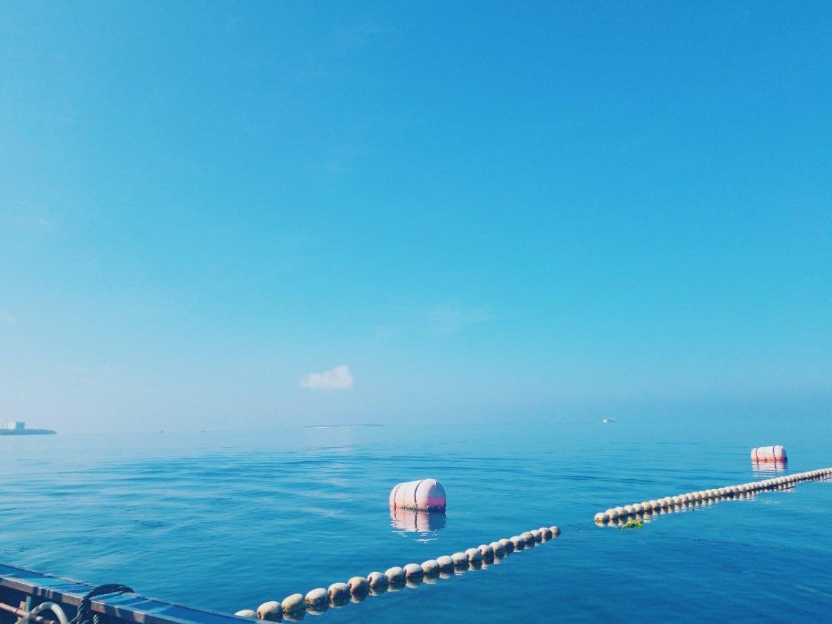 船で生け簀へ:マンタやサメの飼育観察体験ツアー