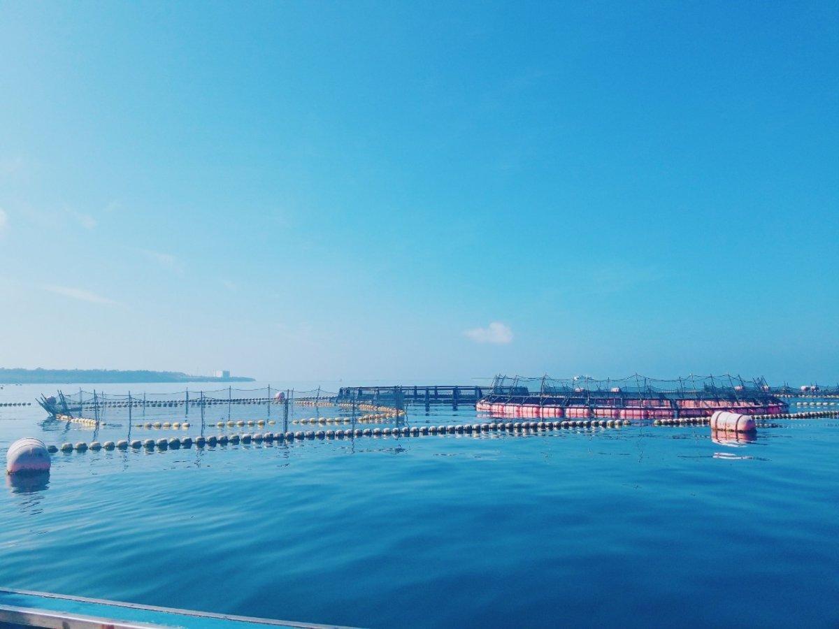 生け簀から見える島々:マンタやサメの飼育観察体験ツアー