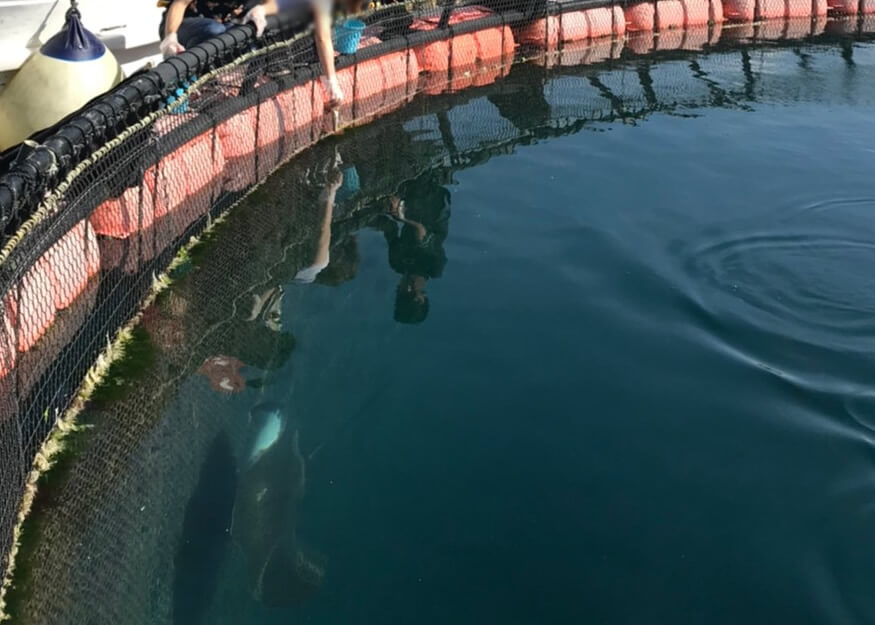 サメとマンタの餌付け体験