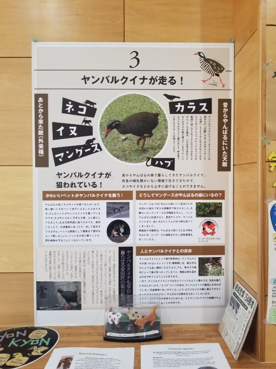 ヤンバルクイナが走る:ヤンバルクイナ生態展示学習施設 クイナの森