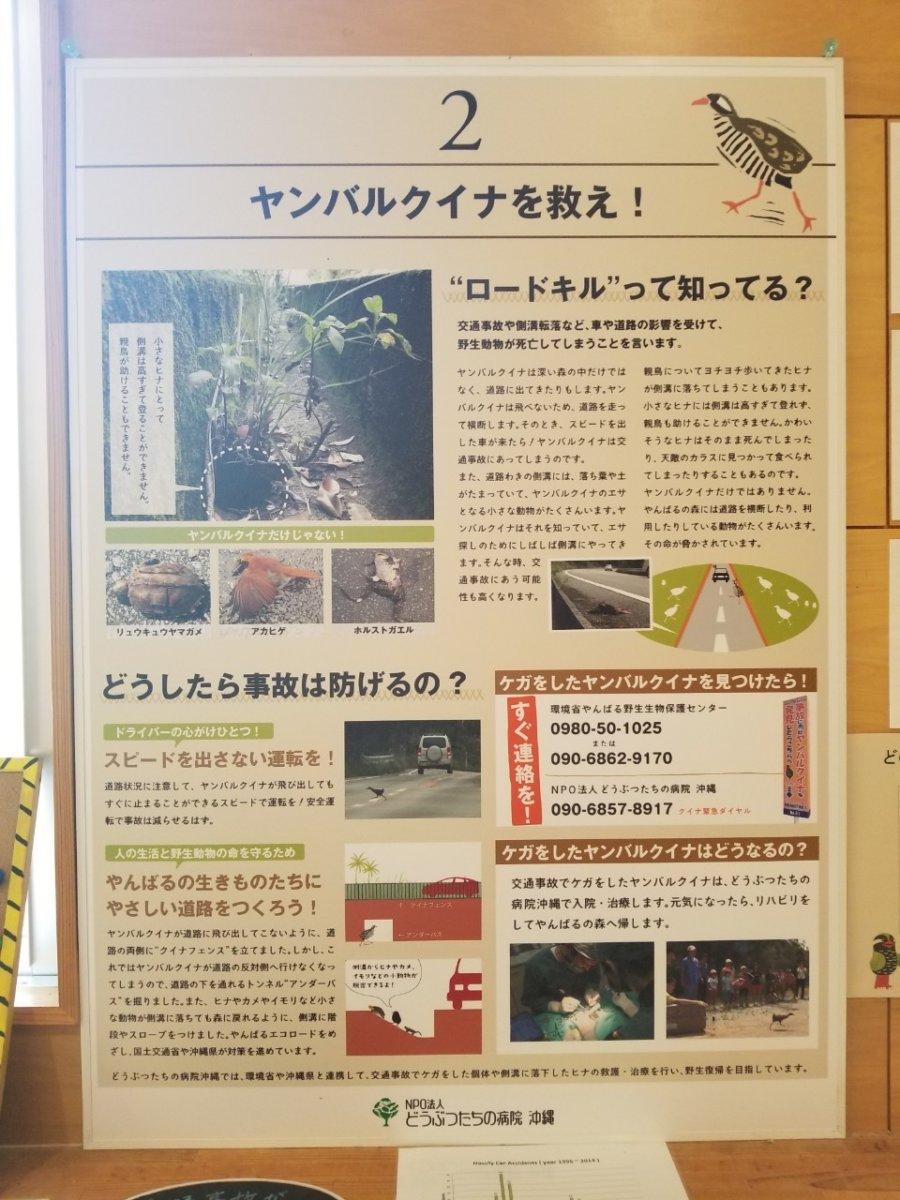 ヤンバルクイナを救え:ヤンバルクイナ生態展示学習施設 クイナの森