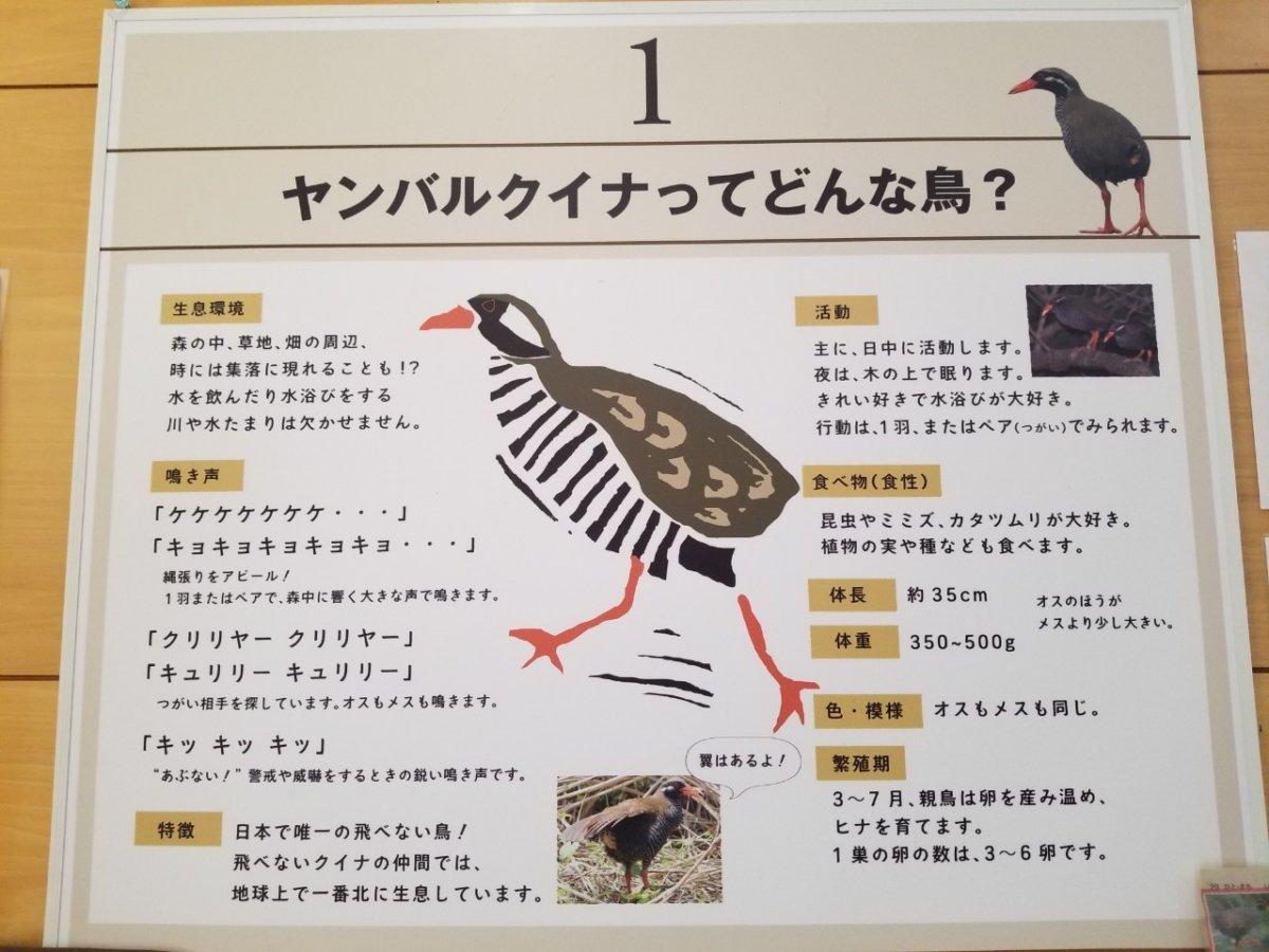 ヤンバルクイナってどんな鳥?:ヤンバルクイナ生態展示学習施設 クイナの森