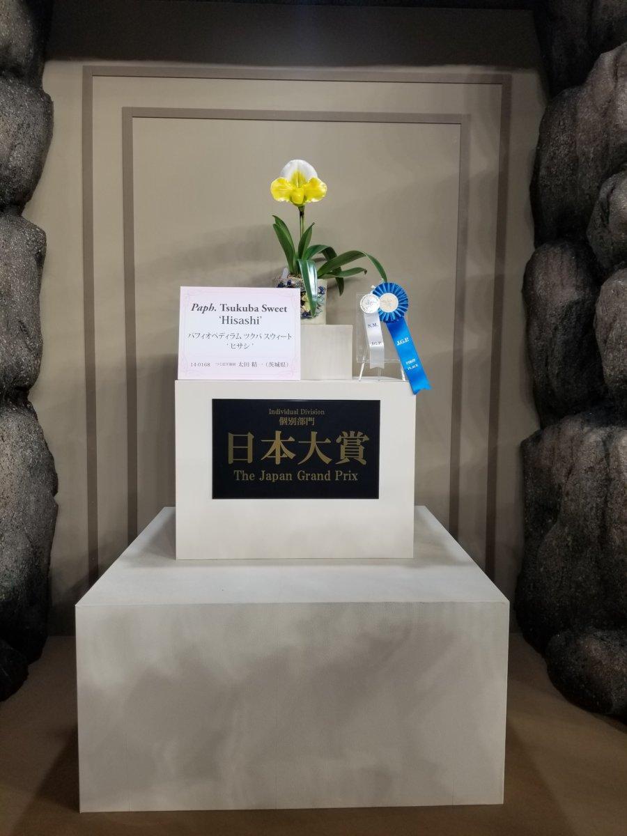 世界らん展2020~栄えある!日本大賞★パフィオペディラム ツクバ スウィート ムサシ