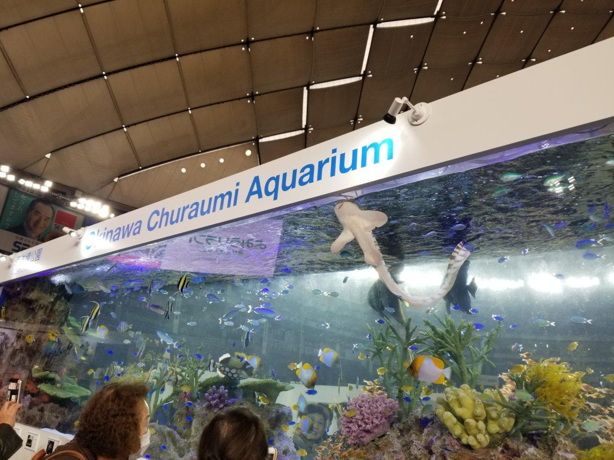 世界らん展2020~出張!美ら海水族館