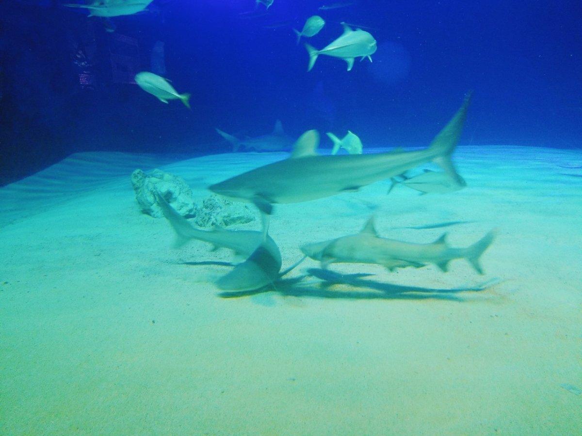 サメ!サメ!!サメ!!!:ナイトアクアリウム:美ら海水族館: