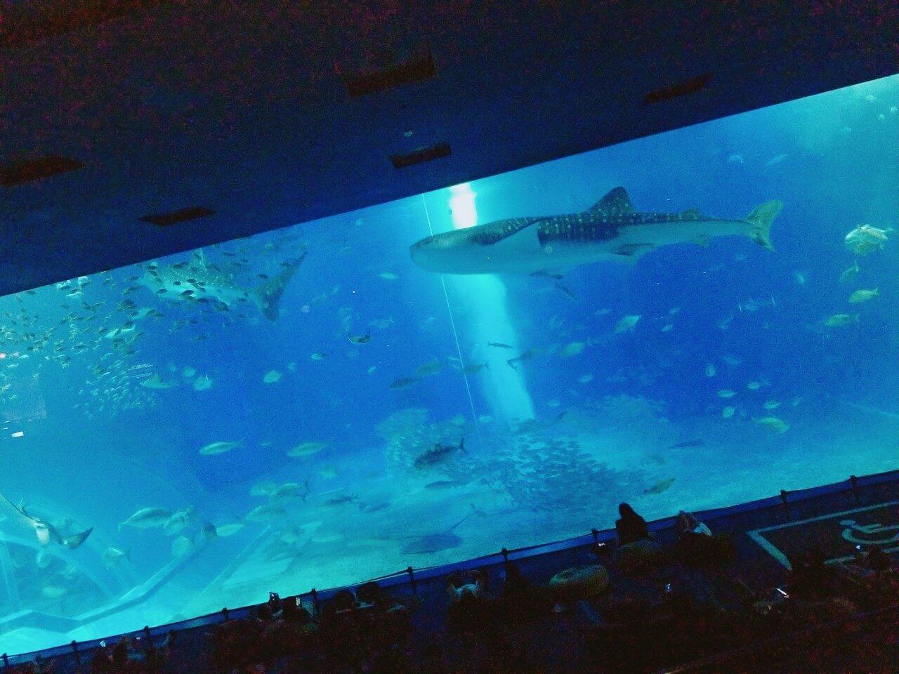 黒潮の海:ナイトアクアリウム:美ら海水族館: