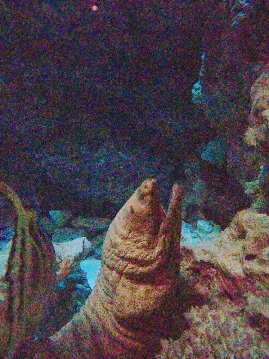 元気なウツボ:ナイトアクアリウム:美ら海水族館: