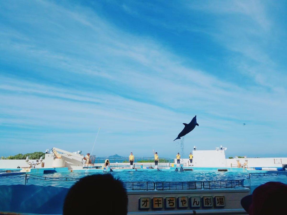 美ら海水族館ー元気なイルカくんたち。めちゃ飛んでる