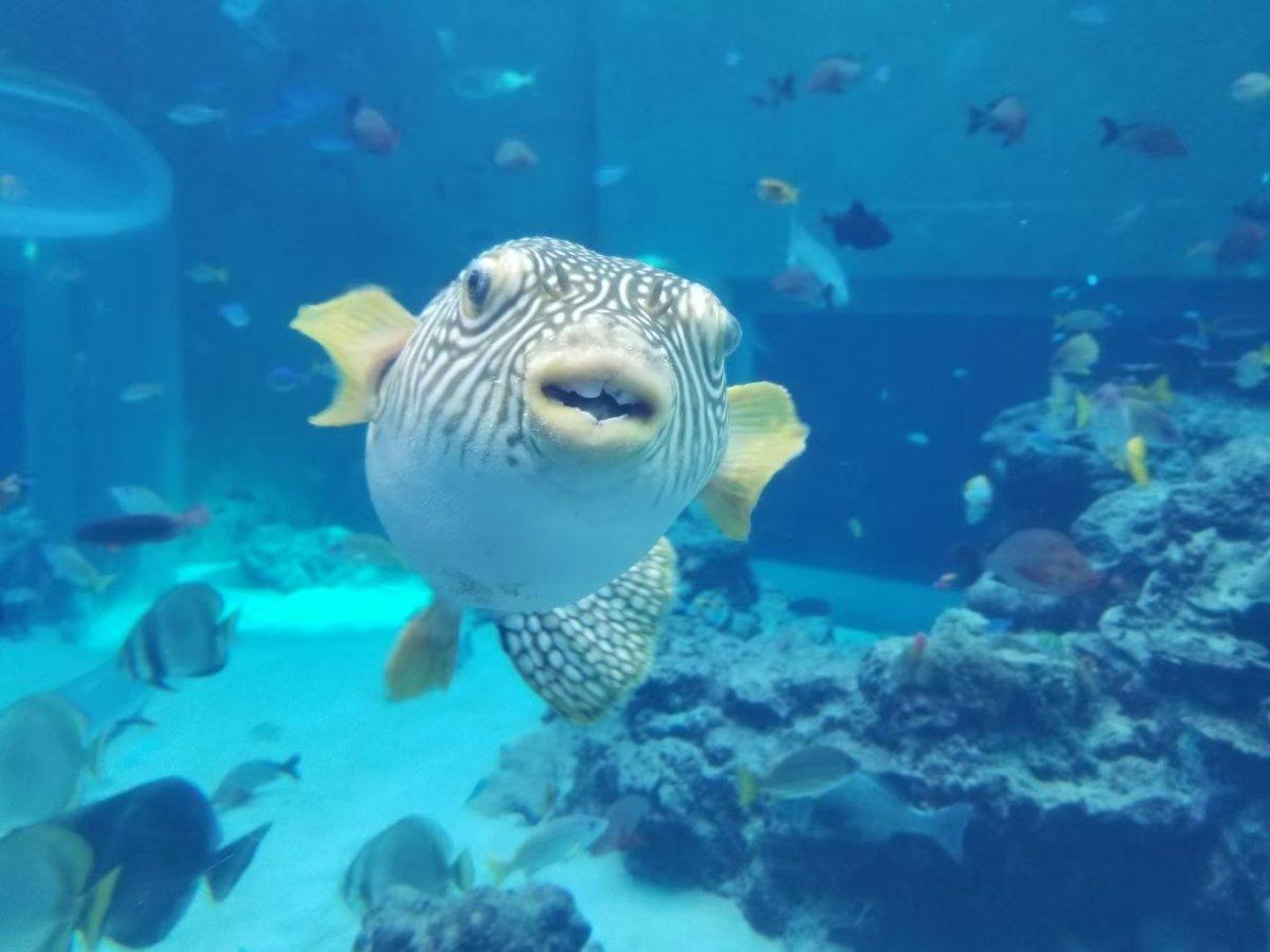 美ら海水族館ーフグ