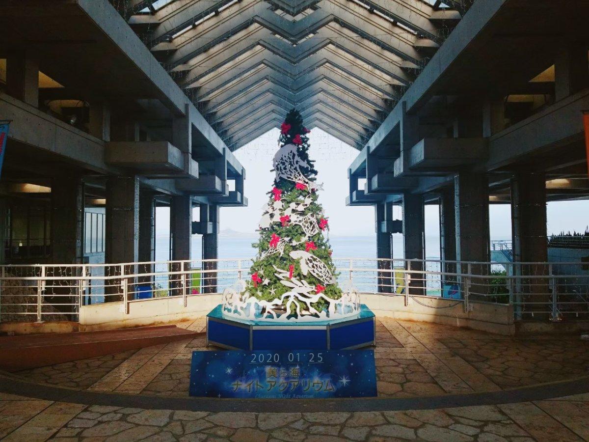 美ら海水族館ー入り口のツリー