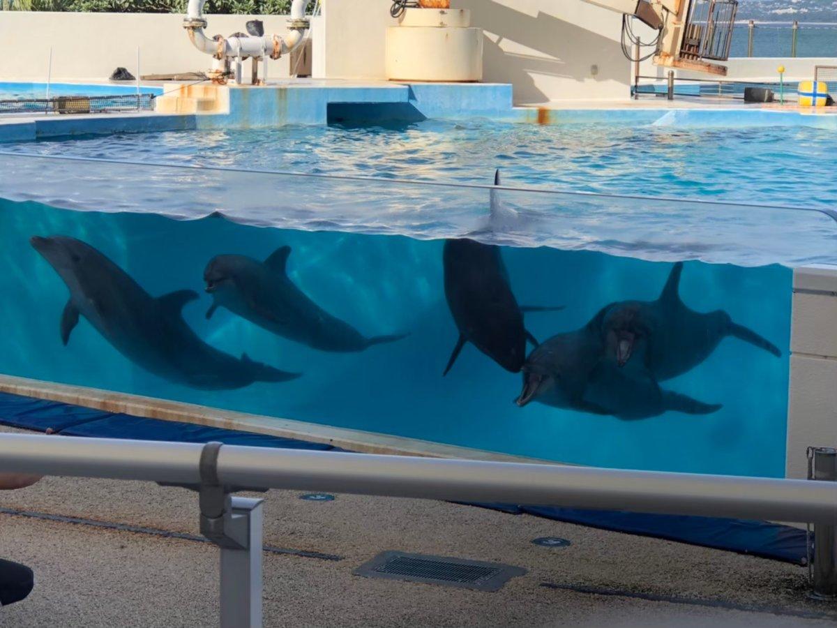 美ら海水族館ーイルカショー