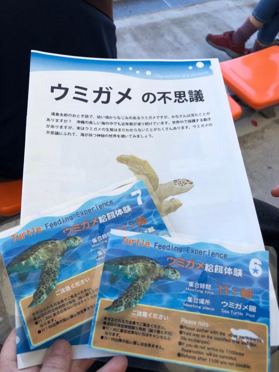 美ら海水族館ーウミガメ給餌体験