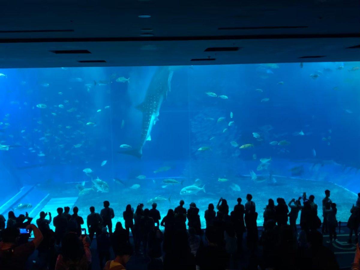 美ら海水族館ージンベエザメ給餌
