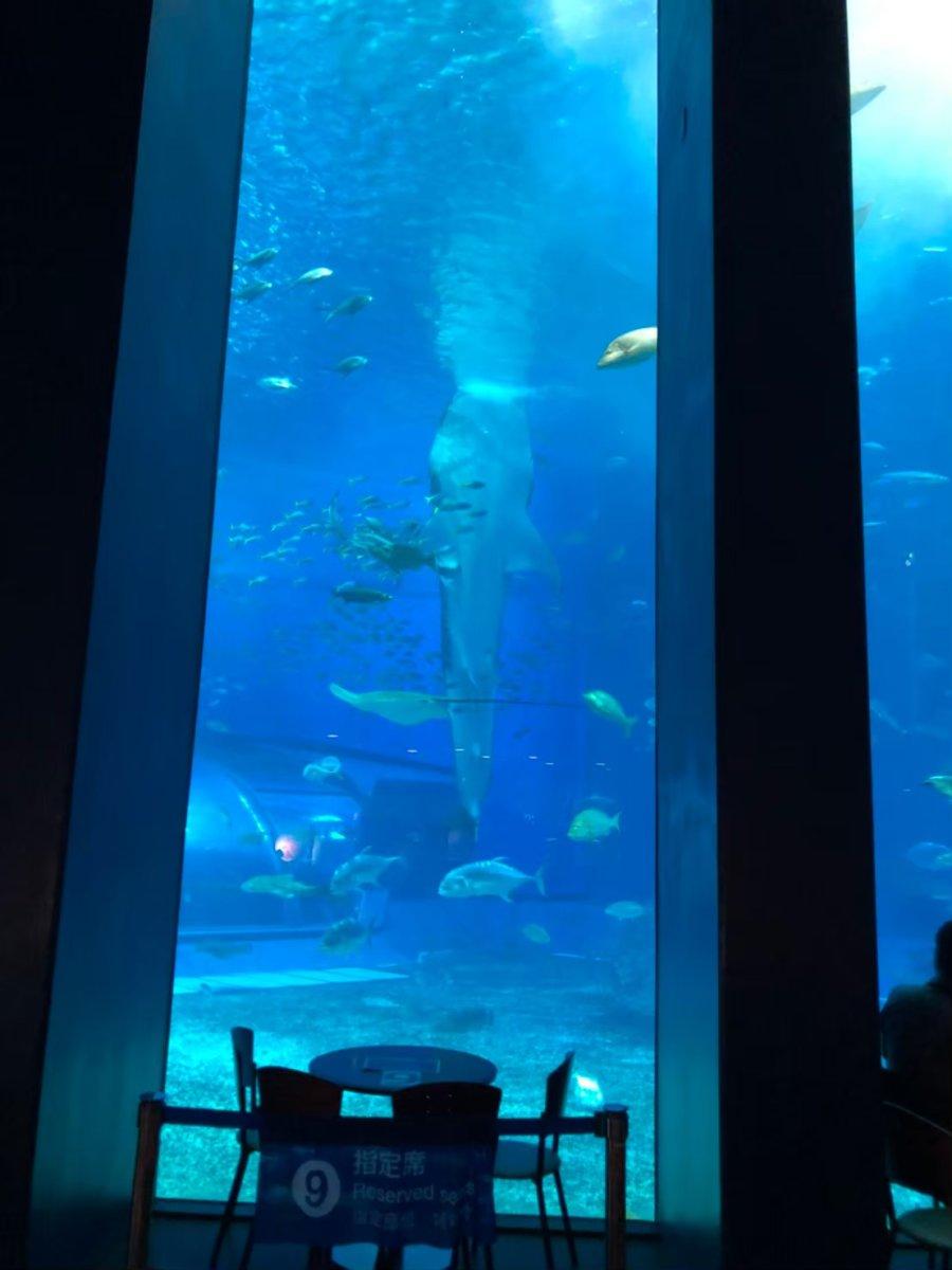 美ら海水族館ージンベエザメの給餌