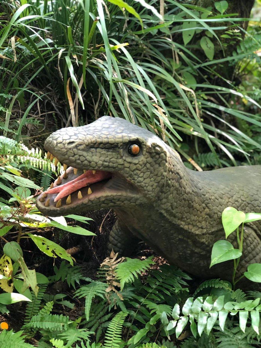 ダイナソー:DINO恐竜PARK やんばる亜熱帯の森ダイナソー:DINO恐竜PARK やんばる亜熱帯の森