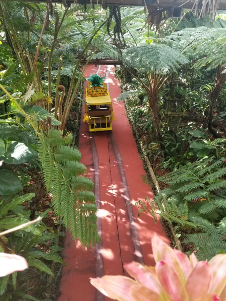 南国の植物の中を行くパイナップル号::ナゴパイナップルパーク