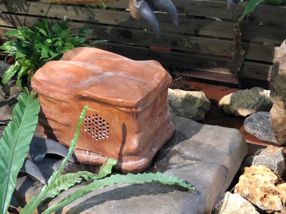 秘密のボックス。ダイナソーの叫び声が聞こえる…:ダイナソーアドベンチャーツアー:ナゴパイナップルパーク