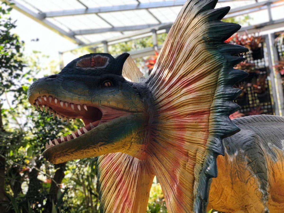 鮮やか&リアルだわ、このエリマキトカゲ風ダイナソー:ダイナソーアドベンチャーツアー:ナゴパイナップルパーク