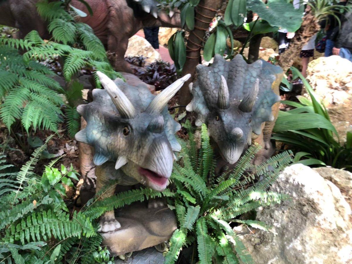 可愛い!子供のトリケラトプス:ダイナソーアドベンチャーツアー:ナゴパイナップルパーク