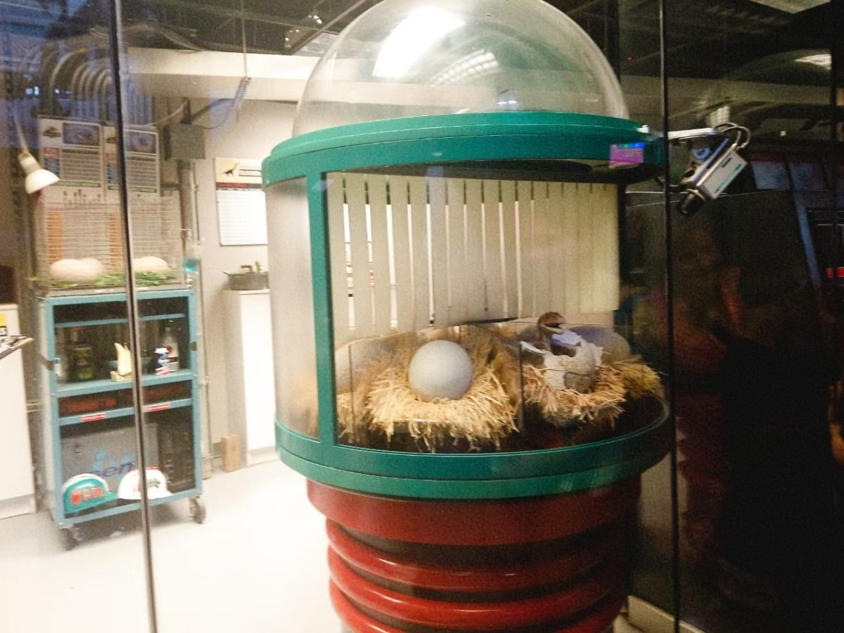 恐竜の卵観察:ユニバーサルズ・アイランズ・オブ・アドベンチャー