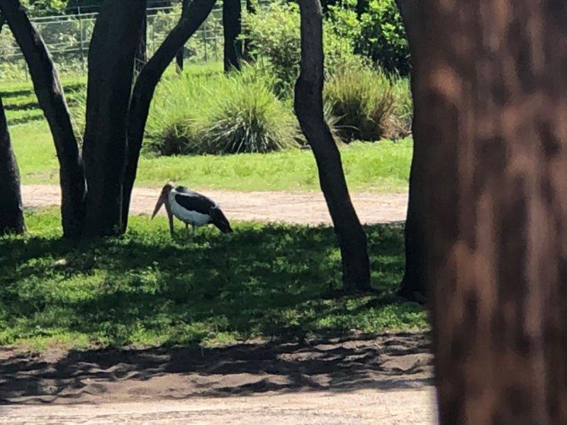 アニマルキングダムロッジ:動物が見える