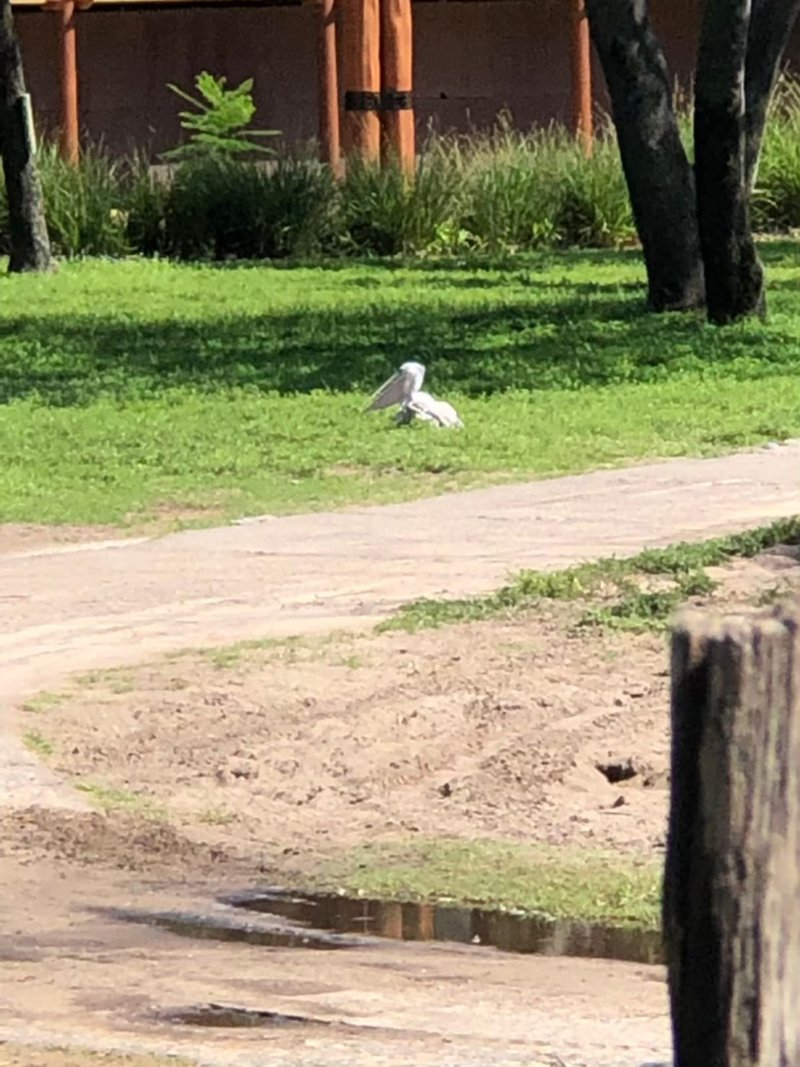 アニマルキングダムロッジ:何の鳥かな?