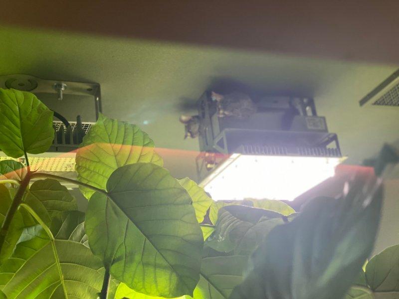 カワスイ:蛍光灯のところに…いる
