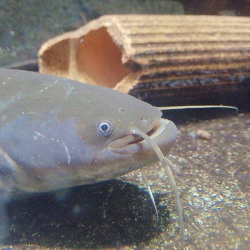 加茂水族館:淡水コーナー