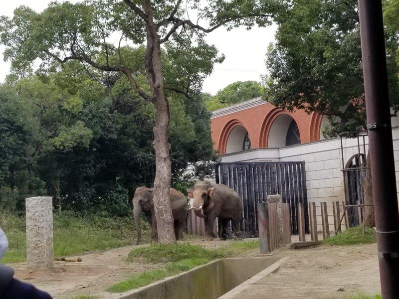 インドゾウ:ズーラシア