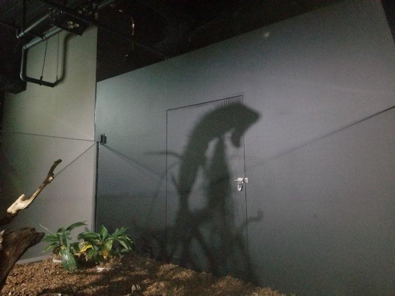 グリーンイグアナの影…!:カワスイ:川崎水族館